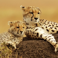 Tavernsolia Prime Safaris Tours K Best Of Kenya Feature Image