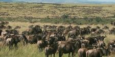 Tavernsolia Prime Safaris Tours K Masai Mara Image
