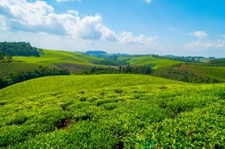 Think Rwanda Teaplantations 430