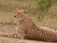 Dallago Tours and Safaris Kenya Tanzania