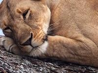 Lifetimesafaris Safari Trip2