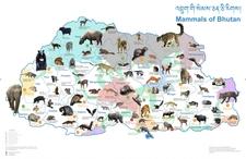 Mammals In Bhutan 1024x664
