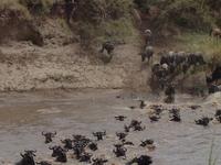 Africa Vast Wildlife 4