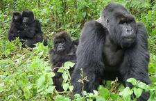 Nninzi Tours And Safari Holiday Tour Company Uganda East Africa 4 Www Nninzitours Com