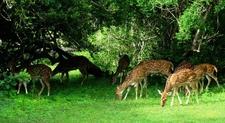Yala National Park Sri Lanka Andbeyondsrilanka Com 22 820x450