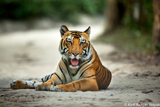 Wildlife Safari Corbett1