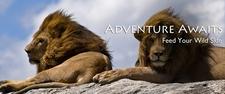 Banner African Safari 3 2