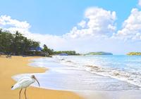 Beach In St Lucia Optimized