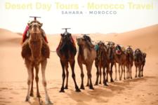 Cameltrekking In Morocco Desert