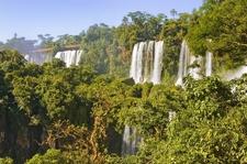 Iguazu Jungle 2