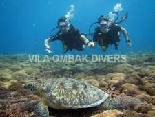 Ombak Diving Turtles