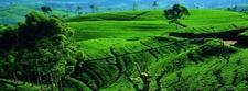 Places To Visit In Nuwara Eliya