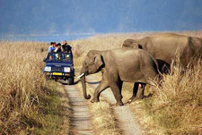 Corbett Tiger Safaris Tours 500x500