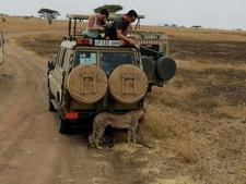 Game Drive Serengeti