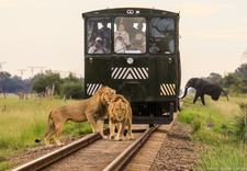 Imvelo Safari Lodges The Elephant Express Nqwele And Bomani And The Elephant They Didnt See 9 Of 1 3