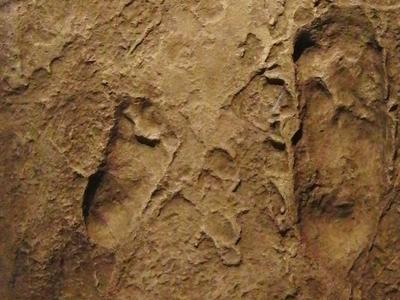 Laetoli Footprints Replica