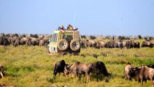 Serengeti Tanzania Safari Jpg 1