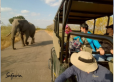 Open Vehicle Safaris