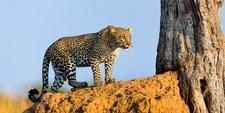 7 Day Safari In Lake Manyara Serengeti Ngorongoro Crater1