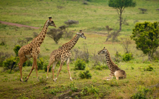 Arusha National Park 1024x637