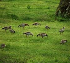 Birding Rwanda
