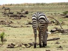 Wildlife Migration Kenya