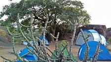Camp In The Jungle Mount Abu