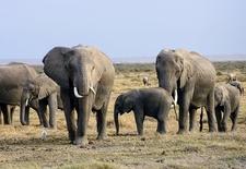 Elephants 2999674 340