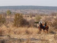 Horse Riding Safari Zht4 Preview