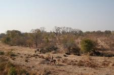 Horse Riding Safari Zht1 Preview