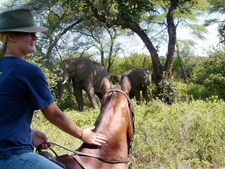 Horse Riding Safari Zht6 Preview