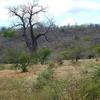 Landscape In Moatize