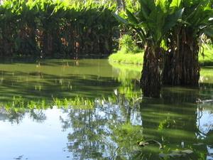 Botanical and Zoological Garden of Tsimbazaza