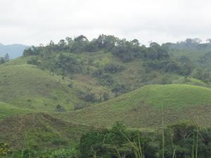Mimongo