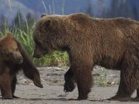 Abler Bears 12