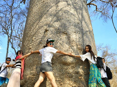 Around The Baobab Tree