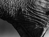 Jamela Africa Safaris