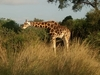 Alpha Wild Safaris