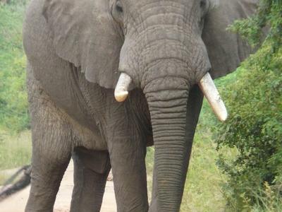Elephant 2064249 1920