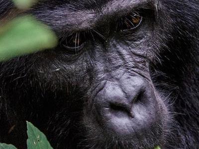 Gorilla Trek Safari Uganda