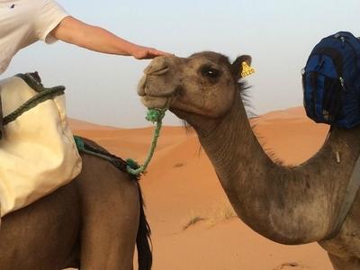 Morocco Trip Adventure 17