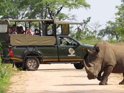 Kruger Park Express Safari 590x390