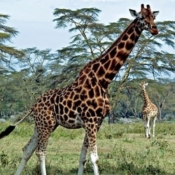 Entuuha Safaris 20