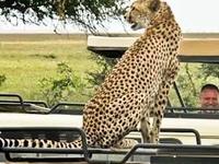 Gamedrives Safari