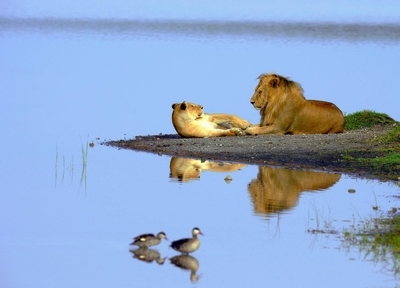 Zumbe Safaris Limited
