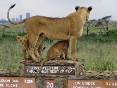 National Parks In Kenya 778x389