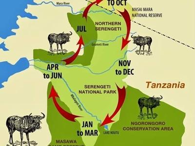 Great Wildebeest Migration Serengeti