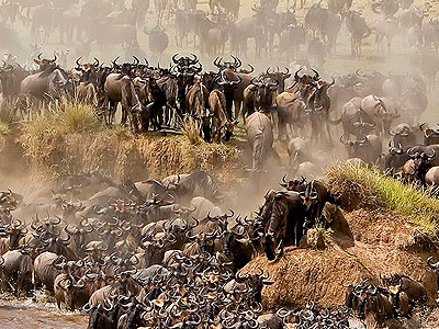 Serengeti Migration2