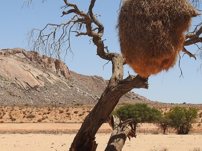 Desert 1913128