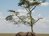 On An African Safari I Want To See Wild African Animals Live Copy